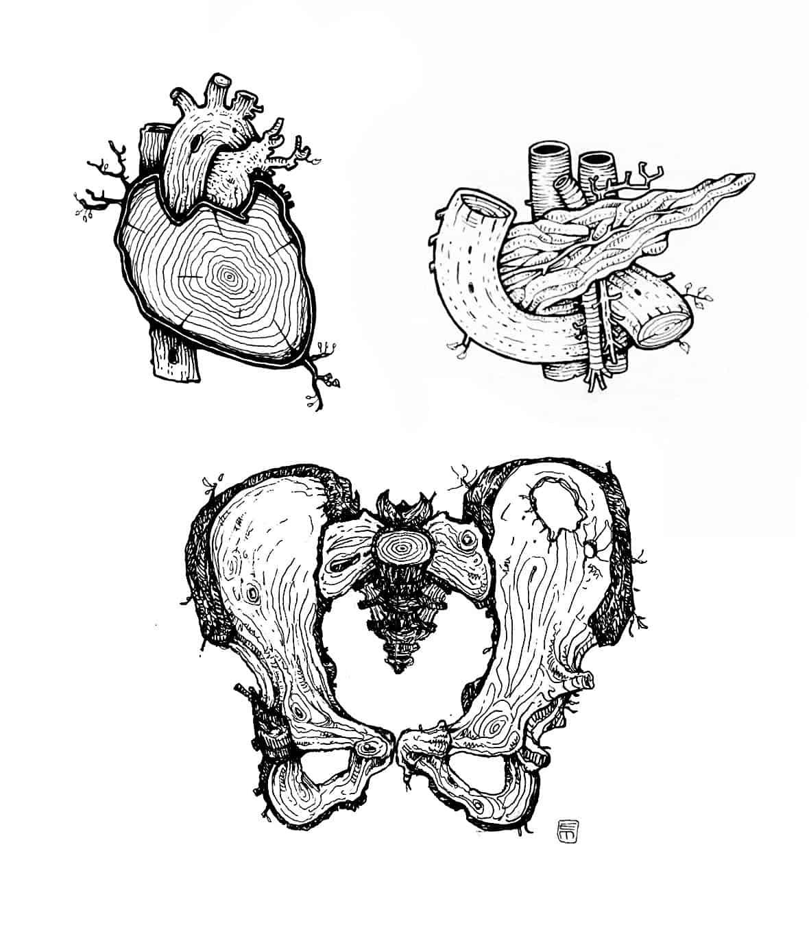 Organi assortiti